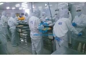 Thi công băng tải lưới inox sản xuất thủy sản